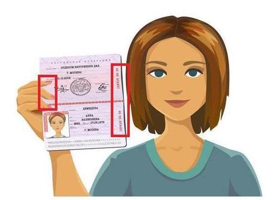 паспорт 1С-Отчетность